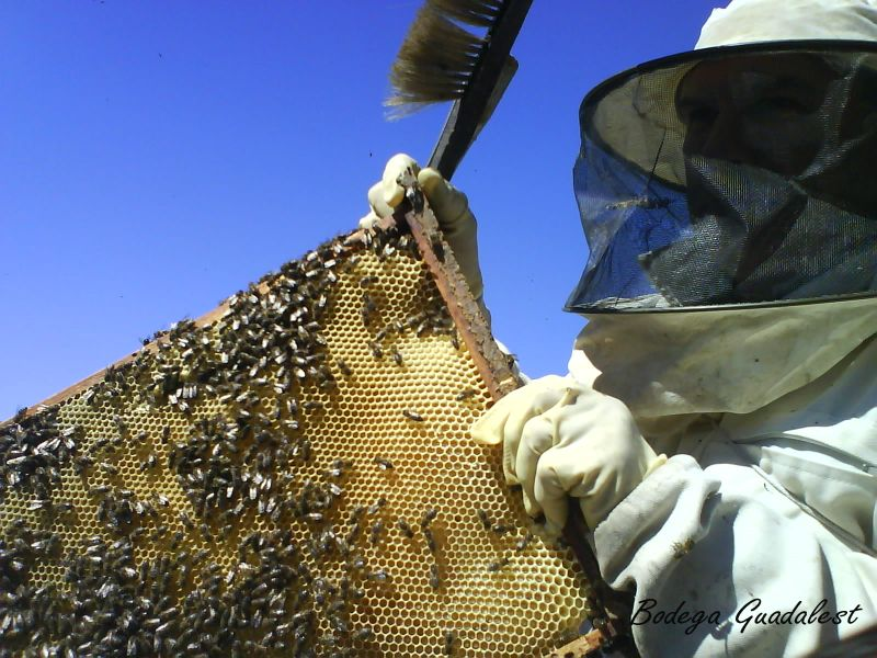 Our beekeeper working